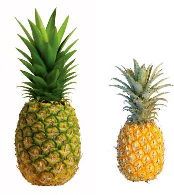 Fresh Fruits Exporter of Bangladesh - MEGA GROUP